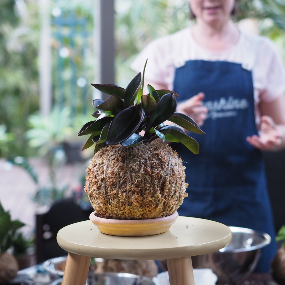 Making a Kokedama